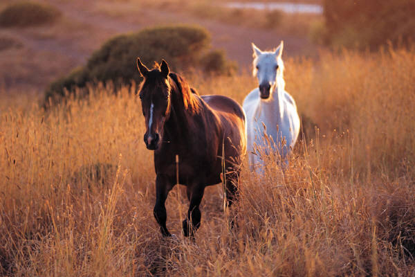 Two-horses 2